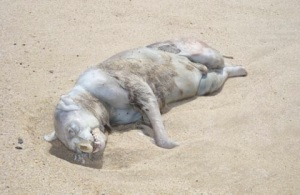 montauk-monster-2